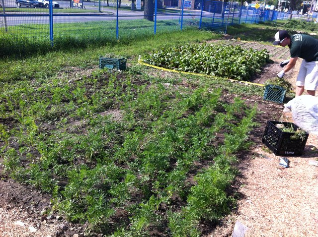 Good BL Home Products   Saskatoon Food Bank Garden Patch July 29 2012